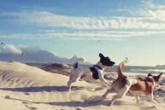 Larochelle-de-Villiers---Blouberg-Beach