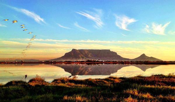 Table Mountain Flamingo Vlei