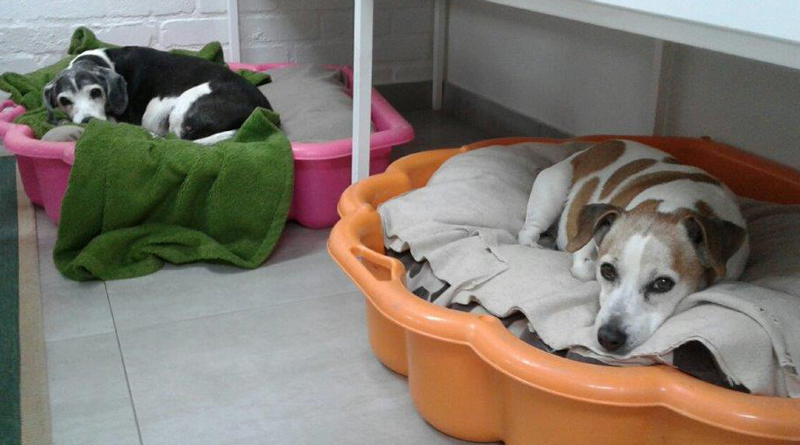 Pawfect Daycare