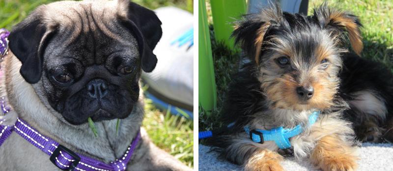 PawFect Pups