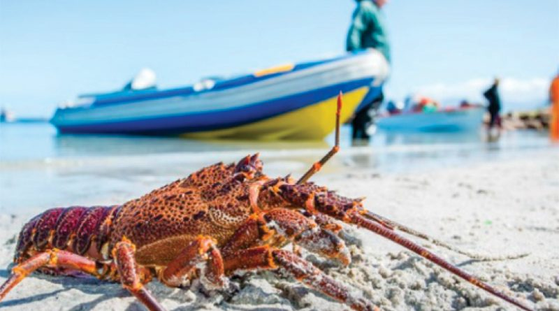 Crayfish Season