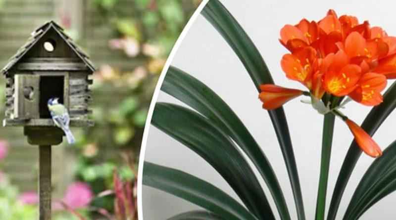 Starke Ayres gardening april